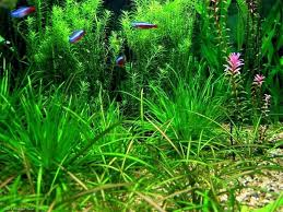 Fish Tank Backgrounds To Print Madran Kaptanband Co