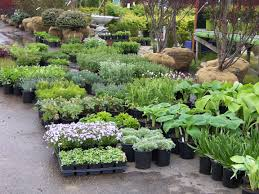 the garden center strives to help people discover the right plants to satisfy their desire for a more beautiful and relaxing outdoor environment and to