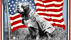 Petition · Lay Sgt. Stubby to Rest: Intern remains of most decorated US war  dog at Arlington Cemetery · Change.org