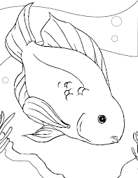 Baby Fish Coloring Pages Related Post Cute Danemillerco