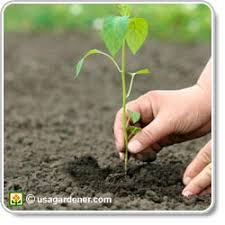 how to make garden soil. Beautiful How HOW TO MAKE GOOD SOIL To How Make Garden Soil