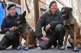 Обувь для собак. Как приучить собаку к обуви?