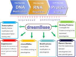 Dreambase Expressed Pseudogene Database In Human Health And