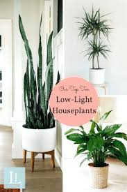 modern office plants. Modern Office Desk Plants 10 Houseplants That Dont Need Sunlight O