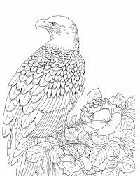Bald Eagle Coloring Pages For Adults Coloringstar