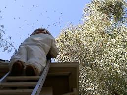 Image result for beehive removal