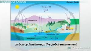 cycles of matter the nitrogen cycle and the carbon cycle video  carbon cycle