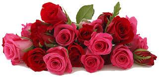Картинки по запросу с днем рождения нежные розы