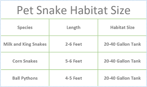 How To Care For A Snake Best Pet Snakes For Beginners Pet