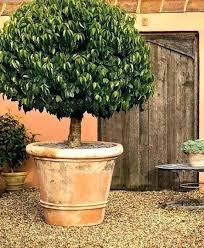 ceramic garden pots and planters large ceramic plant pots extra large terracotta plant pots planters large terracotta pots extra large plastic ceramic