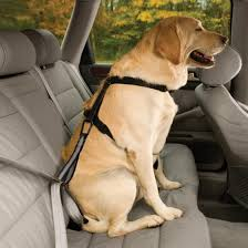 use sun shades to cover the windows when it is hot or very sunny to help protect your dog and never leave them alone in a hot car