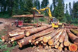 stage environmentmatters   Human Impact of Logging stage environmentmatters   Wikispaces