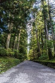 Hd Wallpaper Nikko World Heritage Japan Landscape Pine