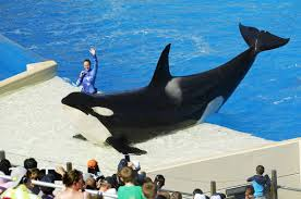 seaworld ceo declares end to kissing dancing for whales chicago tribune
