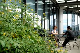 office gardening. Plain Gardening In Line With The Development Of Urban Farming Or Gardening Gardening  Can Be Done Anywhere And By Anyone Limited Availability Land Is No Longer  Inside Office Gardening D
