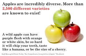 apple food. apples3 apple food