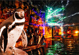 Akron Ohio Zoo Lights
