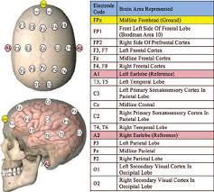 A Semi Schematic Diagram Depicting Dorsal And Sagittal Views