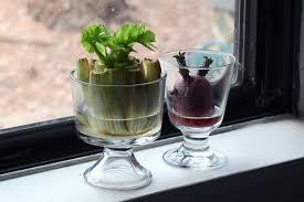 Kitchen Scrap Gardening Grow Vegetables With Table Scraps Hgtv