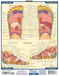 Top Of Foot Reflex Chart Quick Study Reflexology