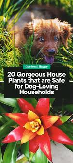 20 gorgeous house plants that are safe