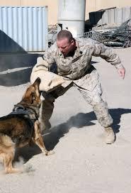 Dog Bite Wikipedia