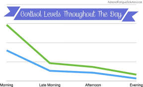 How Do Cortisol Levels Change Throughout The Day