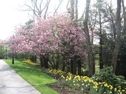 sandwich heritage museums and gardens is gearing up for their national public gardens day organized by the american public gardens association