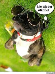 Nie Wieder Alkohol Lustige Bilder Sprüche Witze Echt Lustig