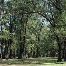 Plant Allergen Guide - Telfast Australia