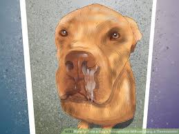 image led diagnose the cause of dry nose in dogs step 7
