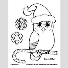 Small Picture Christmas Barred Owl Coloring Page Fun Free Downloads Activity
