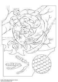 Anaconda Kleurplaat Ausmalbild Groe Anakonda Ausmalbilder Kostenlos