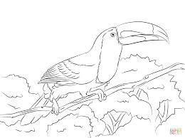 Small Picture Perched Keel Billed Toucan coloring page Free Printable Coloring