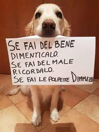 Aforismi sugli Animali - Photos | Facebook