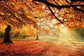 autumn, Trees, Nature, Light, Foliage ...