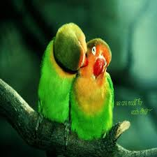 Love Birds wallpaper by Happy_Cool - dc ...