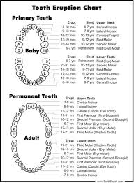 List Of Eruption Teeth Chart Pictures And Eruption Teeth