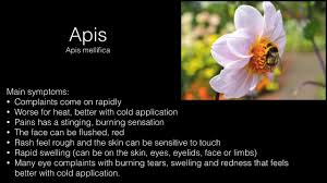 APIS MELLIFICA    HOMEOPATHIC REMEDY FOR HIVES, ITCH, OTHER ALLERGIC ...