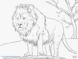 mountain lion coloring pages beautiful lion coloring page male african free printable pages of mountain lion