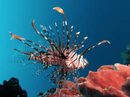 Five Species Of Tropical Fish You Need To Sea On Your Fiji