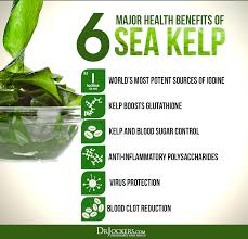can sea kelp cause weight gain