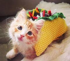 cute kittens in costumes. Brilliant Kittens Tacos  Kittens FTW For Cute In Costumes S