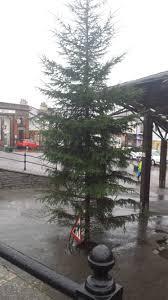 Could This U0027giant Weedu0027 Be Britainu0027s Worst Christmas Tree  TelegraphWorst Christmas Tree