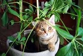 featured image of 20 plants that are safe for children cats and dogs