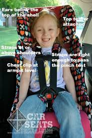 baby car seat harness 53 best cats images on car seat safety car seats