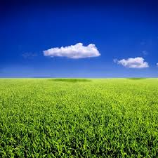 Blue sky grass from the grass highdefinition picture 2 Free stock