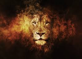 lions new hd wallpapers 2016