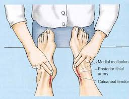 feet pulse locations wiring diagram website foot pulses diagram feet pulse locations wiring diagram website