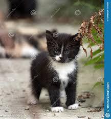 Zwart Wit Pluizig Katje Die Zich Dichtbij Varenblad Bevinden